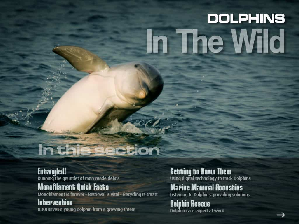 Dolphins in the wild, as they are meant to be